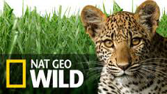 Music by Stuart Fox has been featured on Nat Geo Wild TV